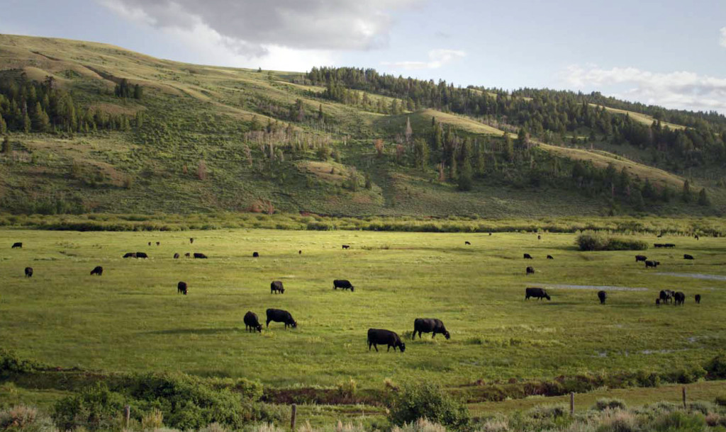 America's open-access grazing policy, which dates back to the 19th century, has given ranchers access to 235 million acres of public land at a low cost.