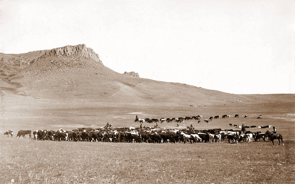 In the second half of the 19th century, cattle ranchers flocked West to take advantage of public grazing lands.