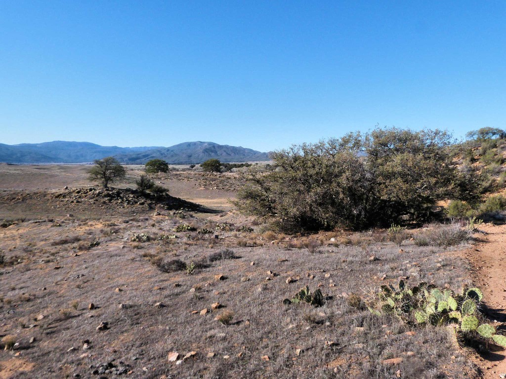 Livestock grazing in the Palomar Mountain area of San Diego County, California, has allowed the invasion of non-native weeds and contributed to the decline of insects and reptiles.