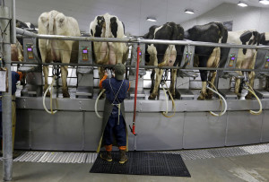 Under federal rules, the industry tests raw milk, both conventional and organic, for at least four of six beta-lactams, a common class of antibiotics that includes penicillin and amoxicillin.