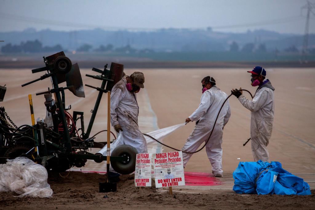 Los productores de fresas de California usan alrededor del 90% de todo el bromuro de metilo en el mundo desarrollado.