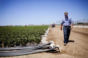 El granjero Edgar Terry usa cloropicrina para fumigar sus campos de fresas. El estado dice que no tiene certeza de que la cloropicrina cause cáncer.