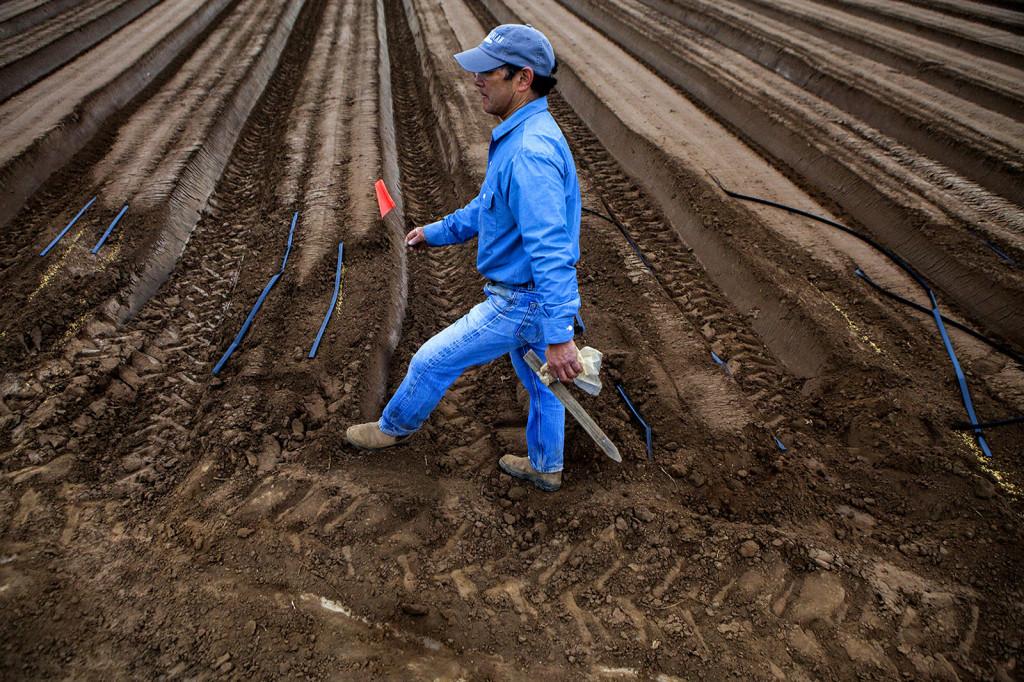 Rod Koda, productor de fresas de Watsonville, California, usa bromuro de metilo en forma preventiva cada año para evitar potenciales problemas.