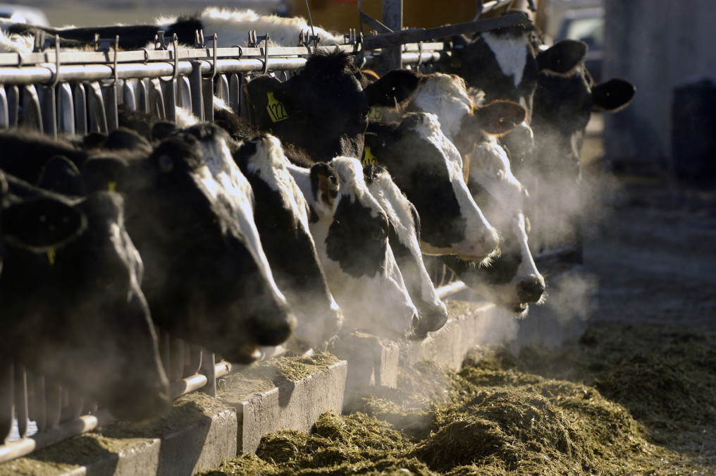 Methane emissions are on the rise  That's a big problem | Reveal