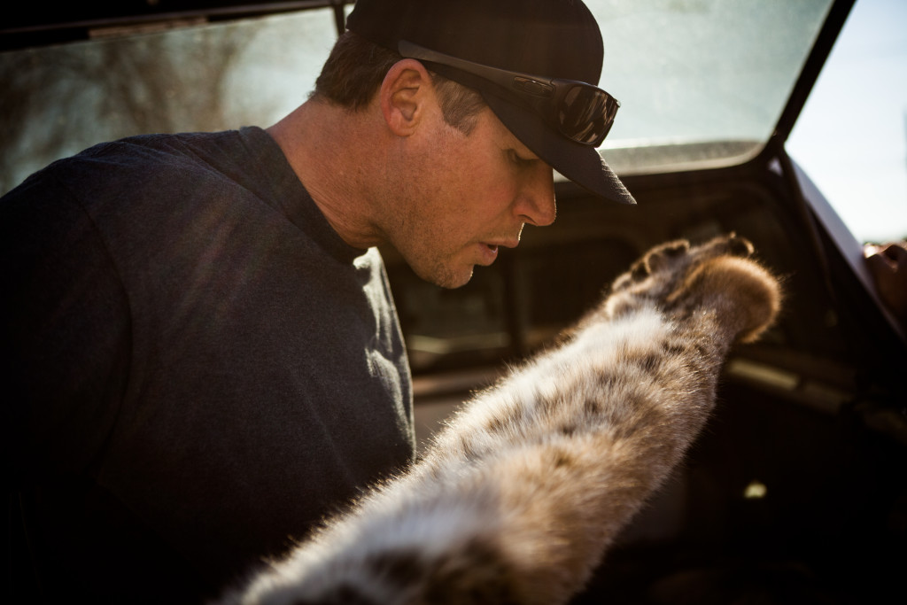 Fur buyer Eric Hansell inspects a bobcat pelt outside the Nevada Department of Wildlife office in Fallon. The animal's spotted fur is what makes pelts valuable in Hong Kong, Paris and other cities where pricey fur garments are sold.