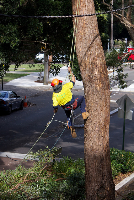 Tree trimming deaths alarm federal officials and industry insiders