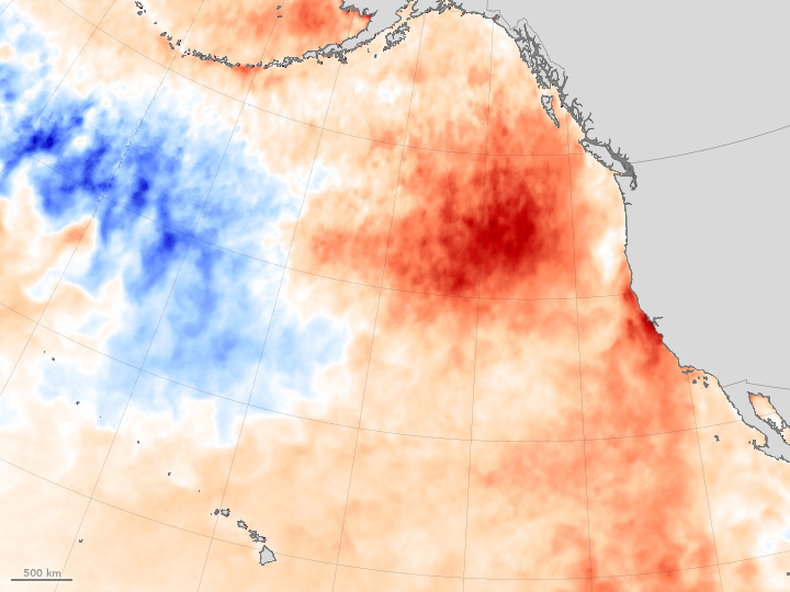 In the winter of 2013-14, an unusually strong and persistent ridge of atmospheric high pressure emerged in weather maps of the northeastern Pacific Ocean. The feature, which was so unrelenting that meteorologists took to calling it the Ridiculously Resilient Ridge, weakened winds in the area enough that the normal wind-driven churning of the sea eased. Those winds usually promote upwelling, which brings deep, cool water up toward the surface; instead, the resilient ridge shut down the ocean circulation, leaving a large lens of unusually warm surface water in the northeastern Pacific.