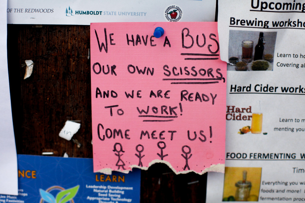 Ads for trimmers are tacked to a bulletin board in Garberville, Calif. Female trimmers often pair up, even form trimming collectives, counting on safety in numbers.