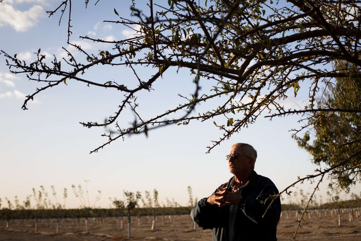 Kern County farmer Mike Hopkins next to a field of new pistachio trees where his cherry orchard once stood.